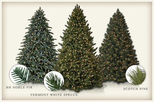 Evergreen Everlasting: The Differences between Fir, Spruce and ...