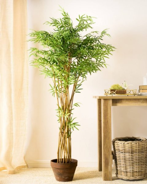 Our Zen Bamboo Tree represents the tranquil beauty of its namesake garden