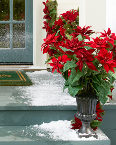 Balsam Hill's Holiday Potted Poinsettia
