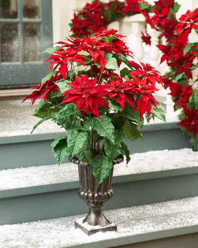 Balsam Hill's Faux Holiday Pointed Poinsettia