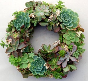 A wreath made of live and growing succulent plants