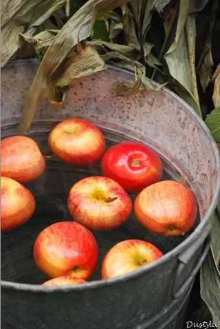 apples floating in a pail full of water