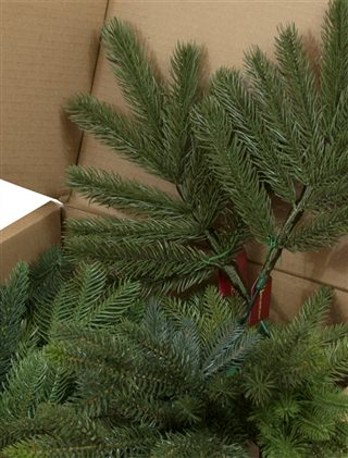 Close-up of branch samples in box