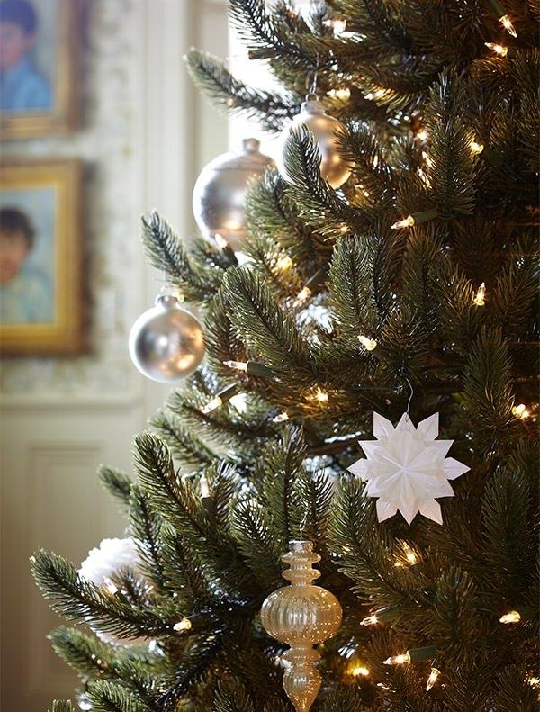 vermont white spruce tree - White Spruce Christmas Tree