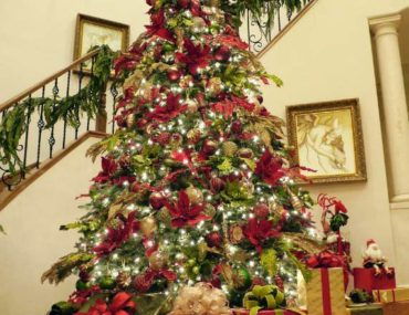 BH Balsam Fir Surrounded by a stairwell