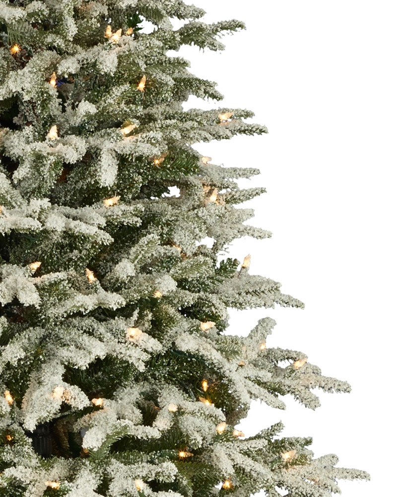 Close-up of BH Frosted Fraser Fir™ Narrow Christmas Tree
