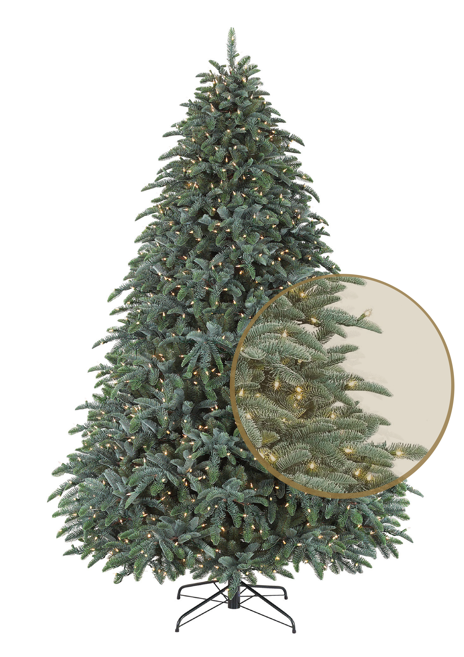 BH Noble Fir Magnified