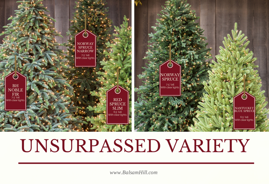 Balsam Hill's Best Christmas Trees