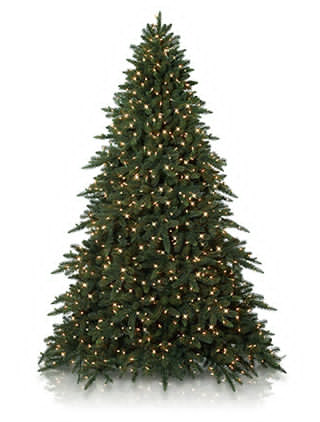 Balsam Hill's 2012 Christmas Tree Shopping Guide