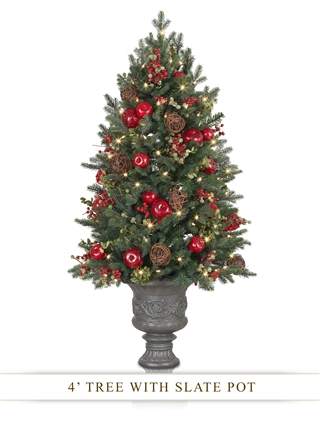 Norway Spruce Holiday Potted Tree from Balsam Hill