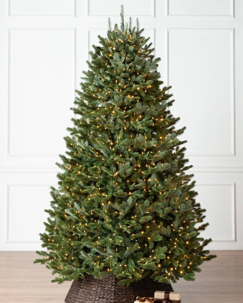 Full shot of the most popular Christmas tree, the Fraser Fir