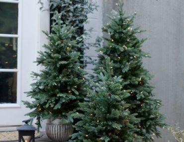 Balsam Hill Greenwich Estate Pine trees
