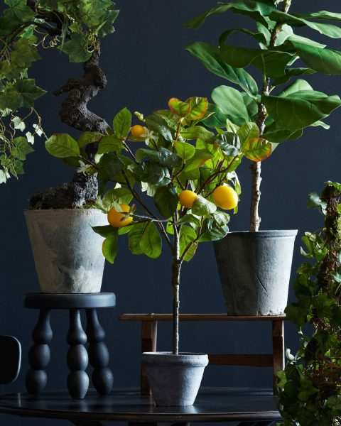Balsam Hill's Topiaries and Plants collection