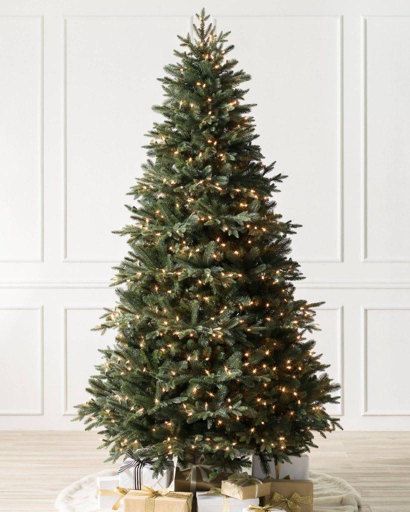 Saratoga Spruce