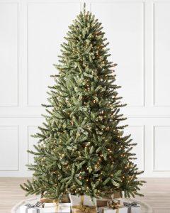 Classic Blue Spruce Narrow Tree