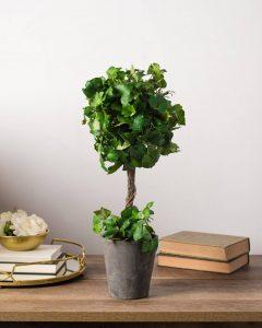 Ivybridge Single Ball Topiary