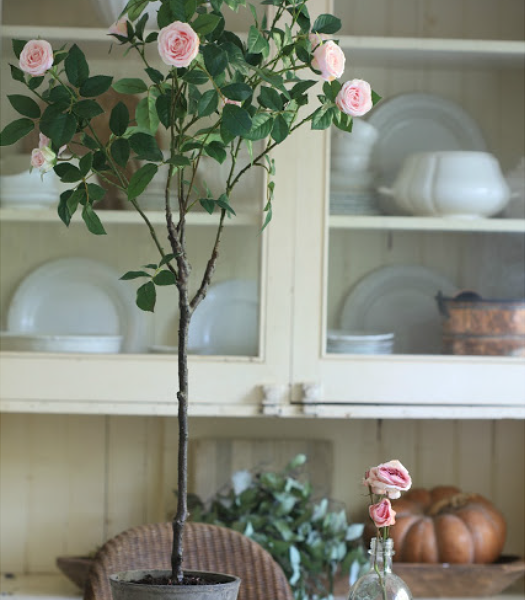 's Surrey Rose Potted Plant
