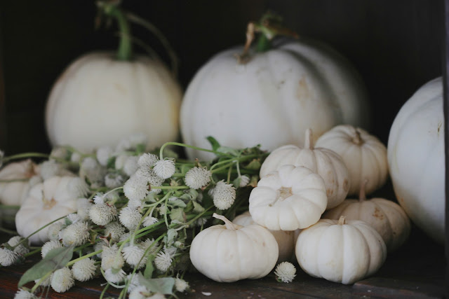 Autumn decor pumpkins