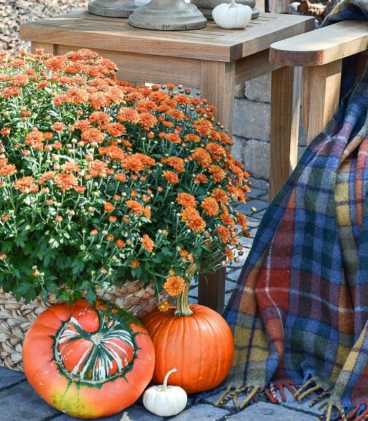 Yvonne Pratt's pumpkins and mums