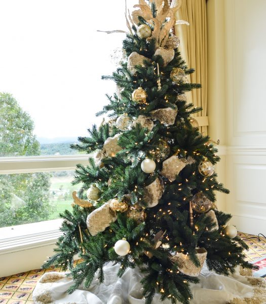 Biltmore Spruce Tree