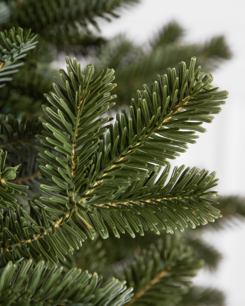Closeup shot of new BH Fraser Fir branches