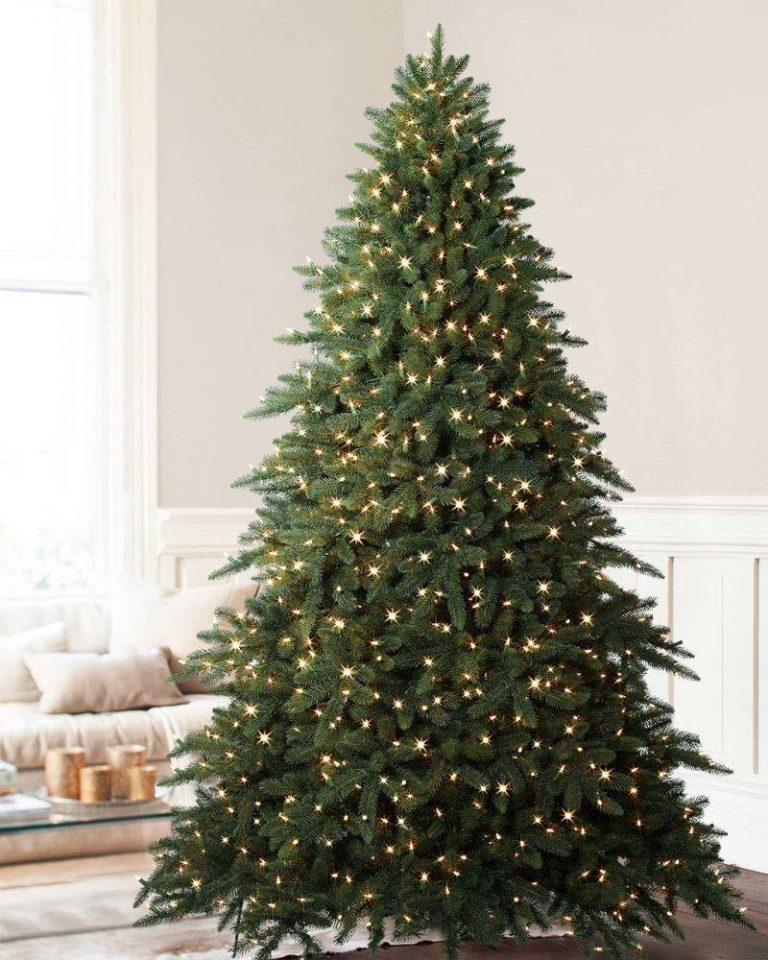 Sparse Christmas Tree Types.Fir Spruce Or Pine How To Tell Evergreens Apart Balsam