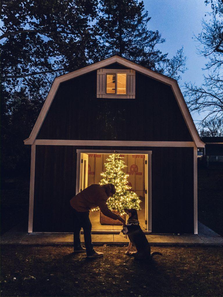Pre-lit European Fir Christmas tree inside shed