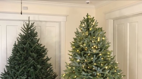 Tree top comparison of a real Fraser Fir and a pre-lit Balsam Hill BH Fraser Fir