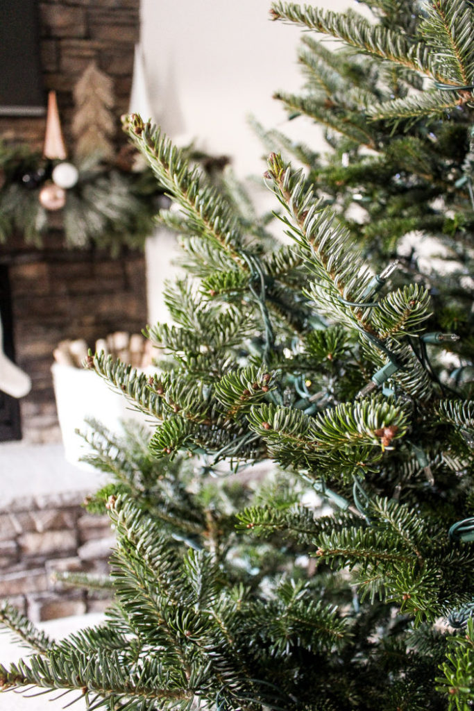Real Fraser Fir branches