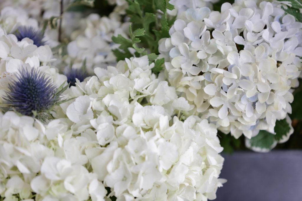 Fresh white hydrangea flowers beside artificial white hydrangea flowers