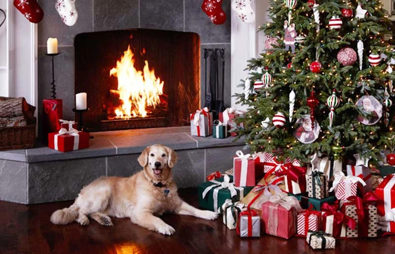 pet dog lying on the floor next to gifts and a decorated Christmas tree
