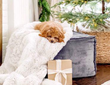 dog on tree skirt