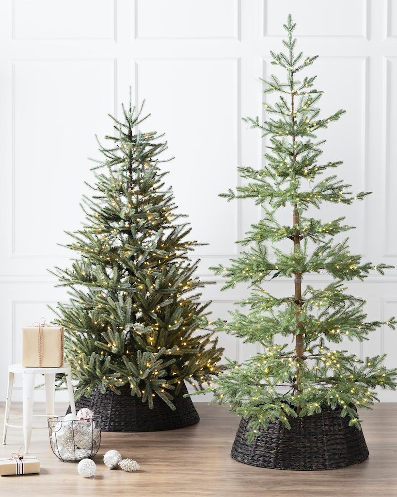Balsam Hill Sanibel Spruce Christmas Tree beside an Alpine Balsam Fir Christmas tree